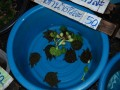 Turtles at Tewet Market
